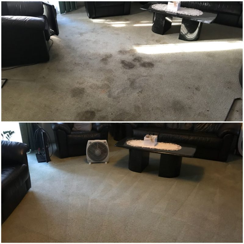 Carpet Steam Cleaning Services vs Carpet Shampooing