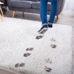 footprints on carpet